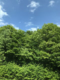 Lush green forest against blue sky royalty free stock photos