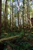 Lush green forest at Hot Springs Cove near Tofino, Canada Stock Images