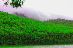 Lush green forest at sun raise stock photos