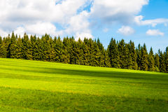 Lush green and freshly mowed meadow on sunny summer day. Rural landspace with green coniferous forest, blue sky and Royalty Free Stock Photo