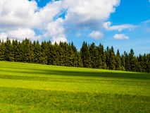 Lush green and freshly mowed meadow on sunny summer day. Rural landspace with green coniferous forest, blue sky and Stock Photos