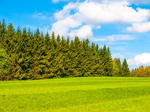 Lush green and freshly mowed meadow on sunny summer day. Rural landspace with green coniferous forest, blue sky and Royalty Free Stock Image