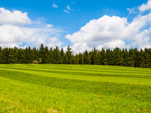 Lush green and freshly mowed meadow on sunny summer day. Rural landspace with green coniferous forest, blue sky and Stock Photography