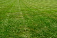Lush Green Lawn. A lush green freshly mown lawn in the summer time Royalty Free Stock Image