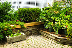 Lush green garden Stock Images