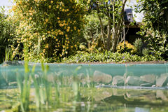 Lush green garden and pond of water Stock Photos