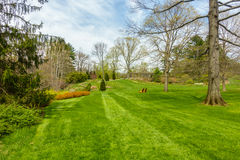 Lush green garden. Well maintained garden with lush green grass and tress Royalty Free Stock Photo