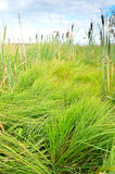 The lush green grass Stock Photography