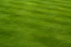 Lush Green Grass. With Lawn Mower Pattern Royalty Free Stock Image