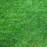Lush green grass stock image
