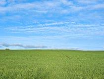 Free Lush Green Grass Stock Image - 9174321