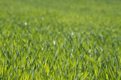 Lush green grass background Stock Photos