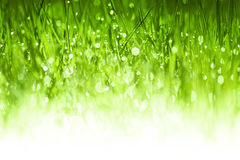 Lush green grass background Royalty Free Stock Photos