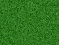 Lush green grass backgrounds Stock Images