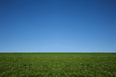 Lush green grass and a cool blue sky Royalty Free Stock Images