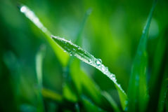 Lush green grass Stock Images