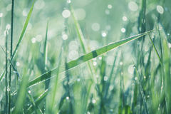 Lush green grass Royalty Free Stock Photo
