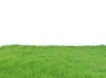 Lush Green Grass field isolated on white background, clipping pa Stock Photography