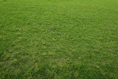 Lush Green Grass Royalty Free Stock Photo