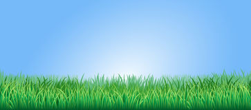Lush green grass illustration Royalty Free Stock Image