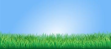 Lush green grass illustration Royalty Free Stock Image