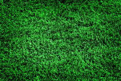 Lush Green Grass Lawn Soft Velvety Stock Image