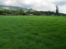 Lush green grass in Maui Hawaii, village in the background Royalty Free Stock Image