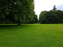 Lush green grass. From moesgaard garden Royalty Free Stock Image