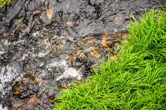Lush green grass on the shore of a small creek Royalty Free Stock Image