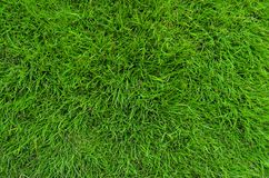 Lush green grass texture Royalty Free Stock Image