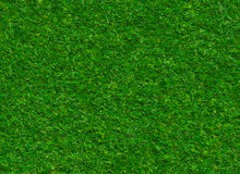 Lush green grass texture on a rock backgrounds Royalty Free Stock Photos