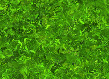 Lush green grass texture. wallpapers pattern Royalty Free Stock Photography