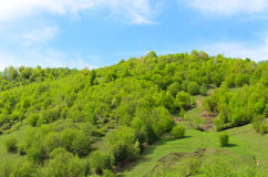 Lush green hillside Royalty Free Stock Images