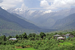 Lush green  himalayan valley and snow peaks Manali India. Lush green  himalayanfarmland valley and snow peaks Royalty Free Stock Photos