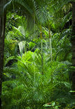 Lush green jungle background. Lush green tropical exotic jungle nature background Stock Images
