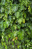 Lush green jungle background Royalty Free Stock Photography
