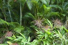 Lush green jungle background Royalty Free Stock Photos