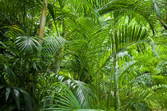 Lush green jungle background Stock Photography