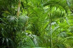 Lush green jungle background. Tropical lush green palm tree jungle background Stock Photography