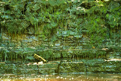 Lush green jungle and water. Lush green jungle rock cliff and river Stock Images