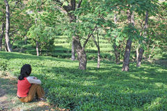 Lush green kangra tea gardens, india. Girl relaxing in lush green tea gardens in Kangra district Himachal pradesh india Stock Photo
