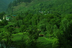 Lush green Kashmir village-Pahalgam. A beautiful scene in the season of a greenery and forest in the valley of Kashmir Stock Images