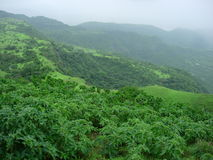 Lush green landscape. Aerial view of lush green mountainous landscape with forest Royalty Free Stock Photography