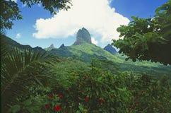 Lush green landscape and nature vegetation on Moorea Island,. French Polynesia royalty free stock photo