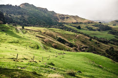 Lush green landscape of New Zealand Royalty Free Stock Photography
