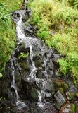Lush green landscape surrounding a small waterfall. Father`s Troy Path East Coast Trail Newfoundland Canada stock photos