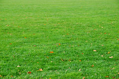Lush green lawn Royalty Free Stock Photography