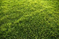 Lush Green Lawn Royalty Free Stock Photo