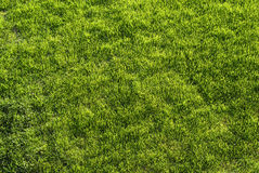 Lush Green Lawn Stock Photos