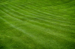 Lush Green Lawn Royalty Free Stock Photo